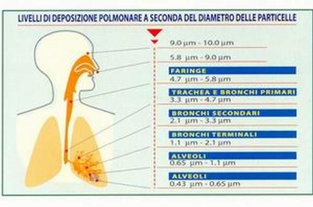 polmoni2.pop