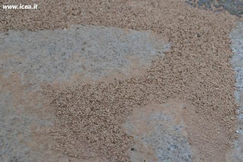 36050_D-Sorb Diatomite